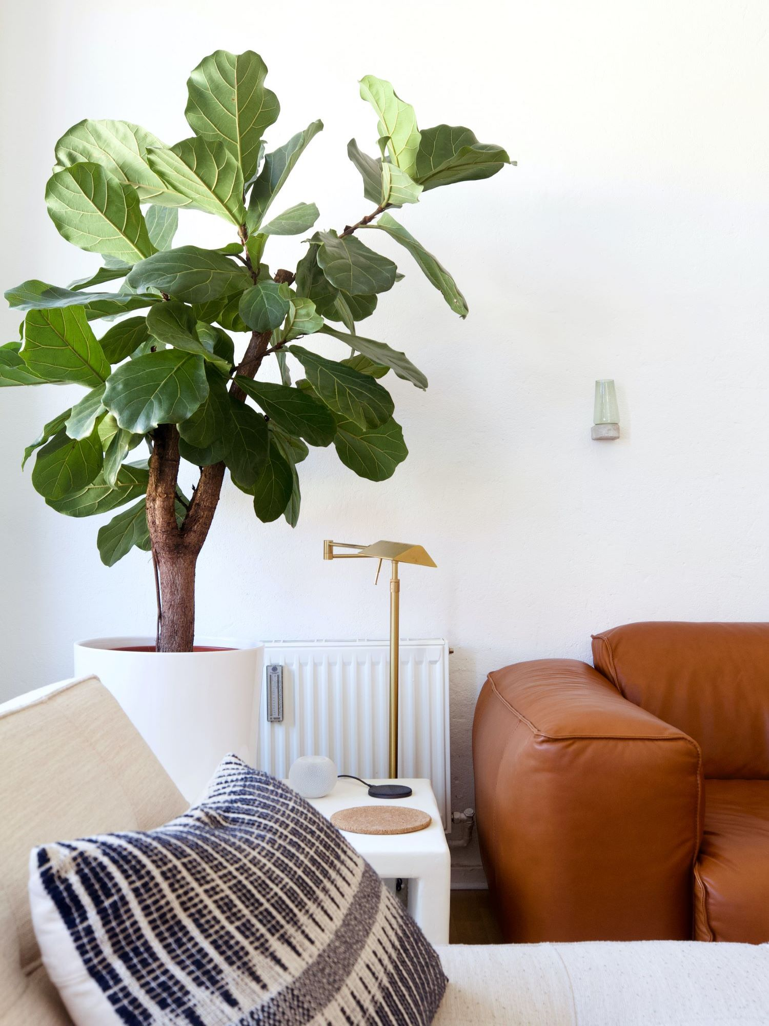 coastal style guide - indoor plant styling