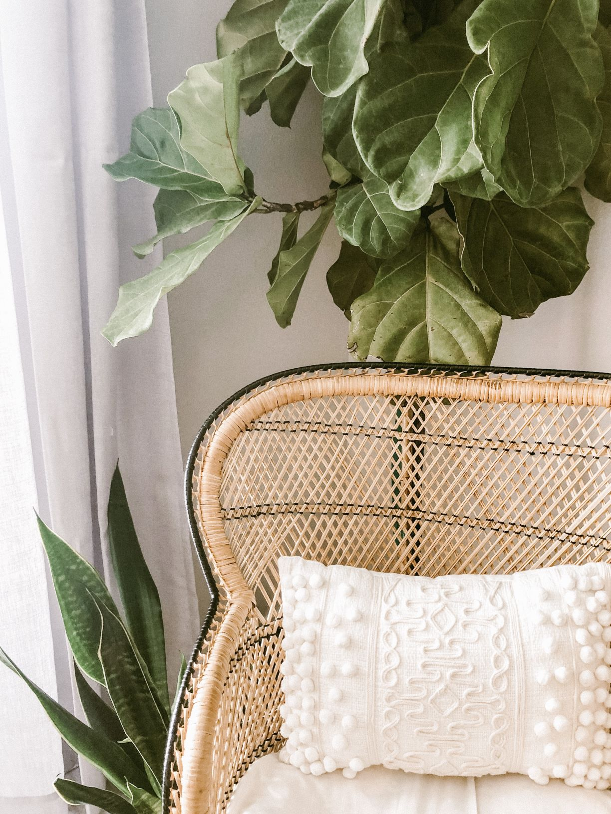 coastal style guide - indoor plants